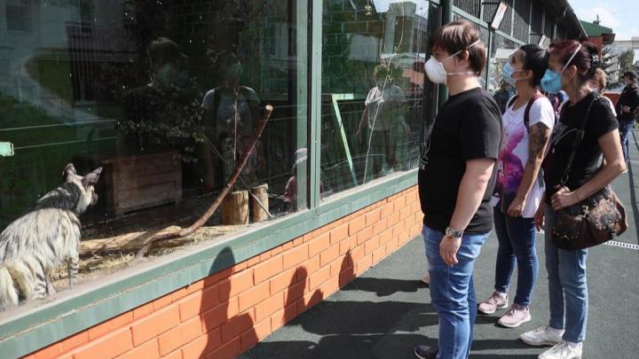 В Екатеринбурге после перерыва в 4 месяца открылся зоопарк: фоторепортаж