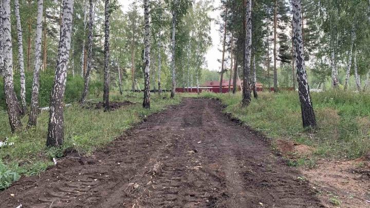 Вырубка деревьев в челябинском лесу ради дороги к коттеджам вылилась в уголовное дело