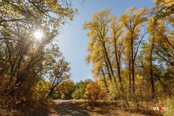 О прогулках по лесам придется забыть до середины осени