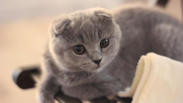 Кузбассовца будут судить за жестокое обращение с животными. Он выкинул котят с 5-го этажа