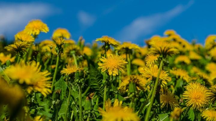 «Берегите посевы»: МЧС предупреждает о заморозках в Прикамье