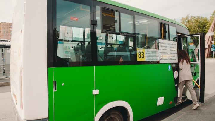 Тюменские власти снова запретили мигрантам работать водителями автобусов и такси