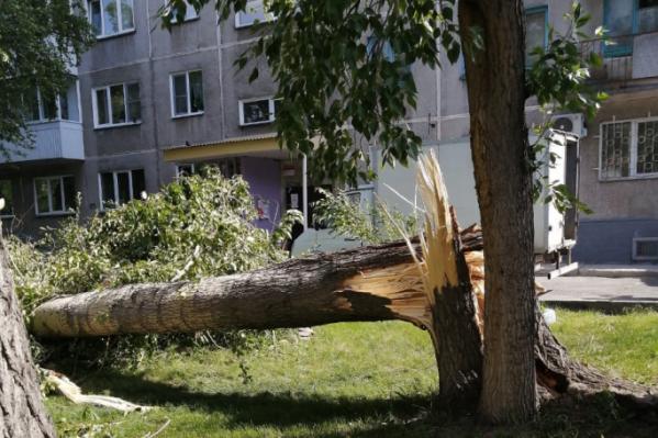 Вчера в Новосибирске был ураган — он ломал деревья, как, например, на улице Тульской, а некоторые даже вырывал с корнем