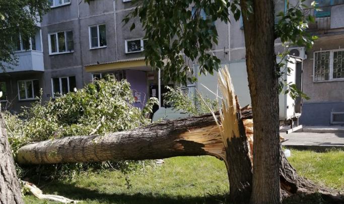Ударило веткой тополя: в Новосибирске из-за урагана погиб мужчина