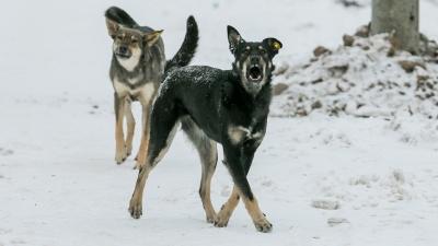 «С меня литра два крови вылилось»: прикормленные собаки разорвали ногу прохожей в Сосновоборске