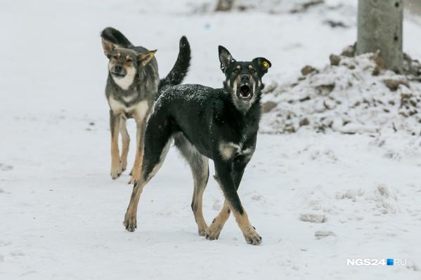 Собак на Шевченко регулярно отлавливают, но там появляются новые, так как жители их подкармливают