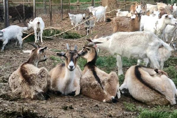 Зоопарк обосновался в хуторе Вертячем