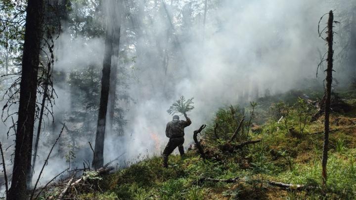 Помогли дожди: пожар в заповеднике «Денежкин Камень» локализовали