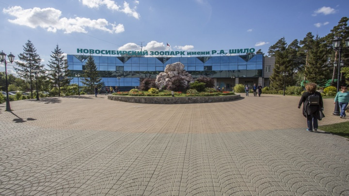 Новосибирский зоопарк в третий раз получит деньги в помощь от властей