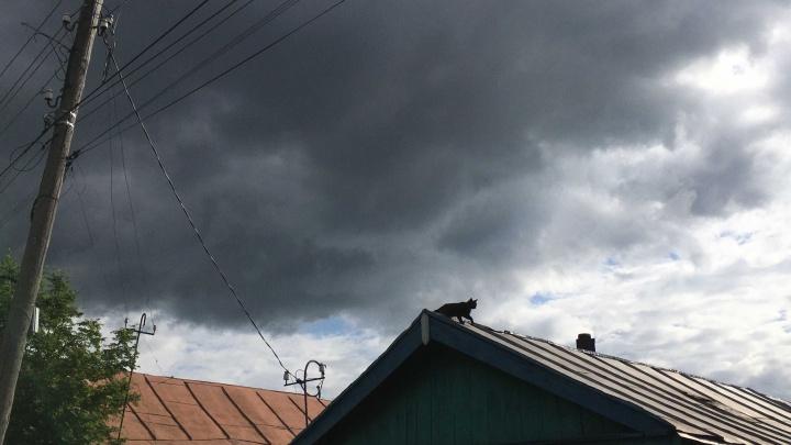Снова гроза, снова ветер: синоптики предупреждают об очередном ударе стихии в Тюменской области