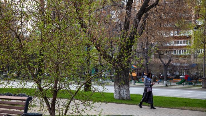 Без нас уже всё позеленело: 15 сочных кадров с улиц Тюмени, по которым гулять запрещено