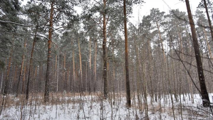 Чиновники сдадут в аренду под застройку и зоны отдыха восемь крупных земельных участков в Екатеринбурге