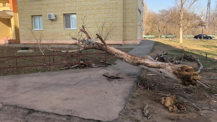 Кто уберет, тот и заплатит: в Волжском ищут хозяина раздавившего машину дерева