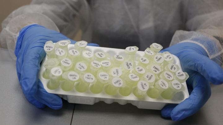 Оперштаб России подтвердил 369 выявленных за сутки случаев коронавируса в Архангельской области