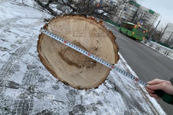 Неизвестные срубили дерево, но не забрали