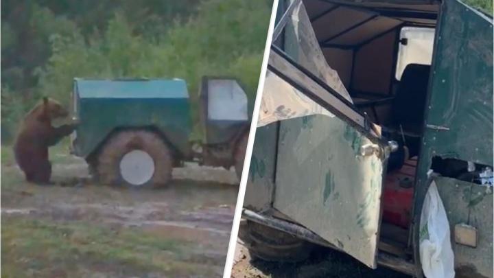 На Среднем Урале медведь-попрошайка вломился в дом к туристам и сломал технику
