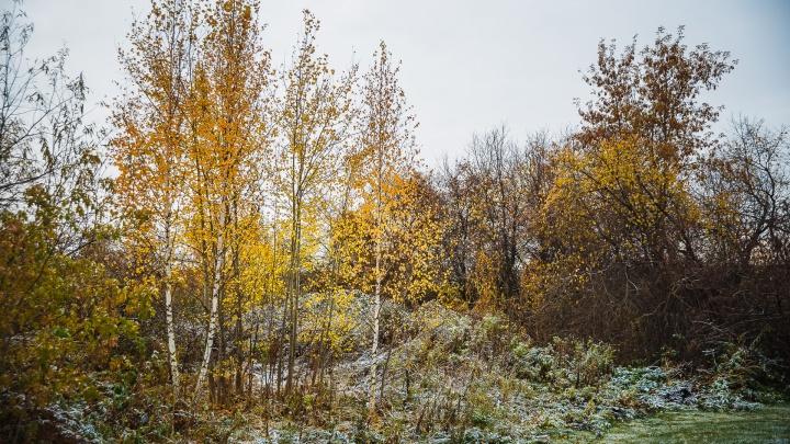 Потепление до +17 с небольшими ветрами ожидается в Кузбассе