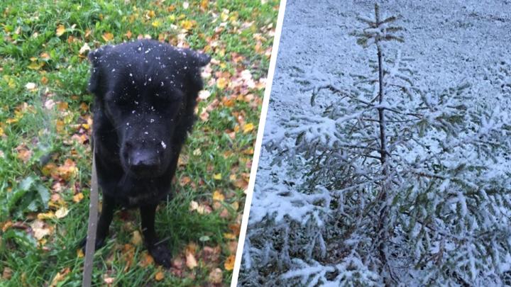 Новогоднее настроение: подборка снежных фотографий сентября от читателей E1.RU