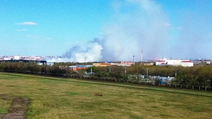 В парке Победы загорелся камыш. Столб дыма видели из разных точек города