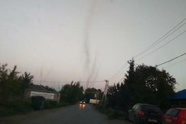 Огромные «столбы» из насекомых висели над дорогой