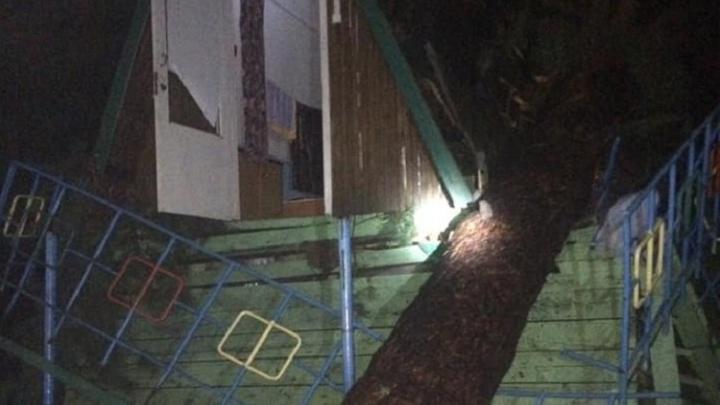 На турбазе в Самарской области дерево упало на заселенный домик