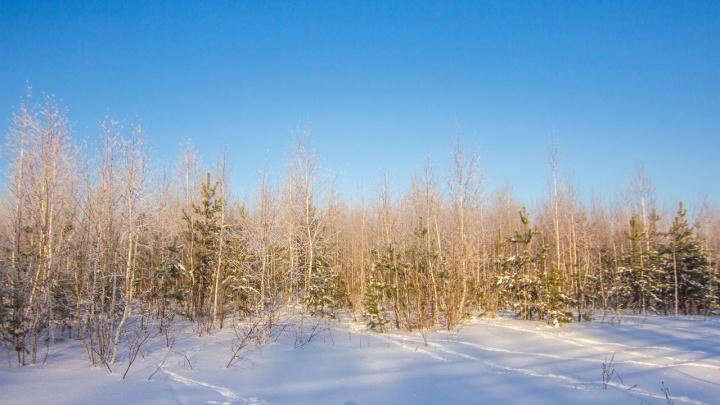 Власти запретили охотиться в лесах Самарской области