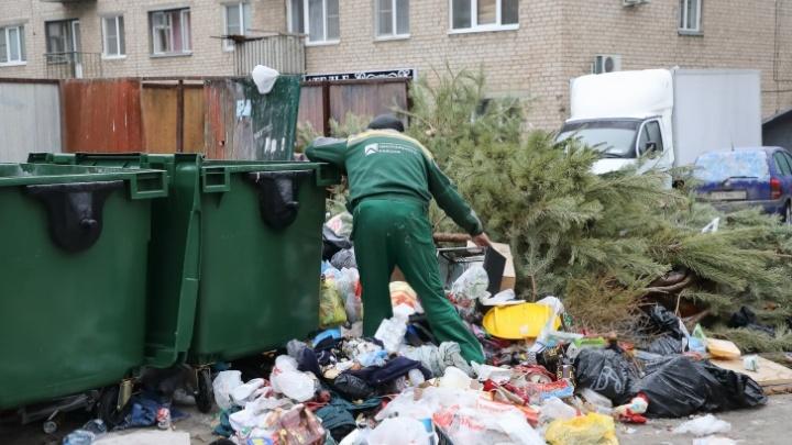 Волгоград не вошел даже в первую сотню: Greenpeace определил города России, в которых удобно сортировать мусор
