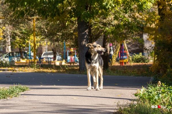 По словам местных жителей, агрессивные животные держат в страхе округу