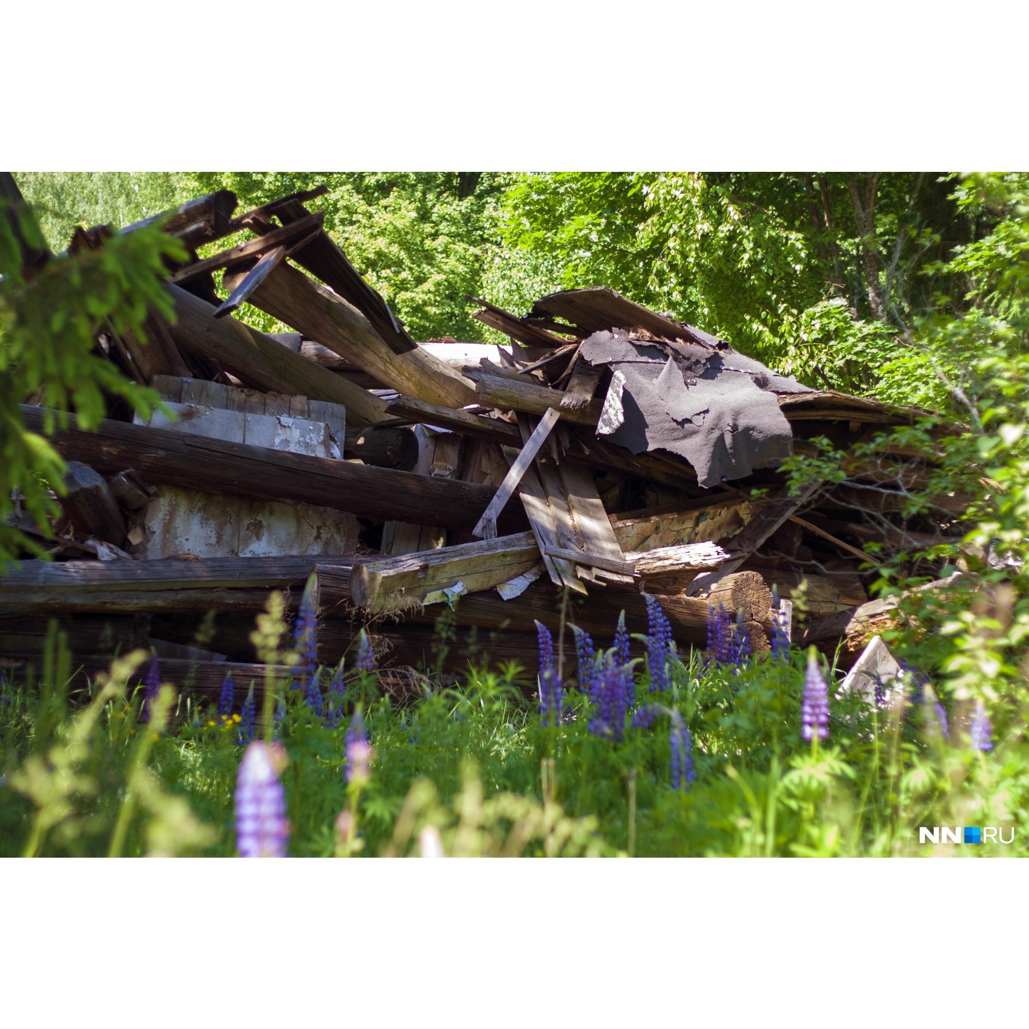 В нежилых деревнях лес быстро забирает свое