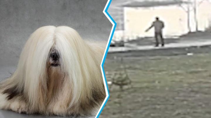 «Как будто петарда взорвалась»: на Затулинке пса Эйрона застрелили на глазах у хозяина