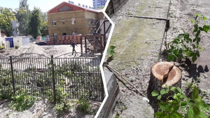 Мэрия Тюмени остановила массовую вырубку деревьев на Мельничной, которую сама и разрешила
