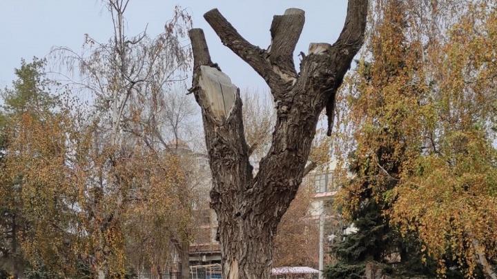 Из коряги в Горсаду Волгограда сделают арт-объект. 33 дерева вырубят