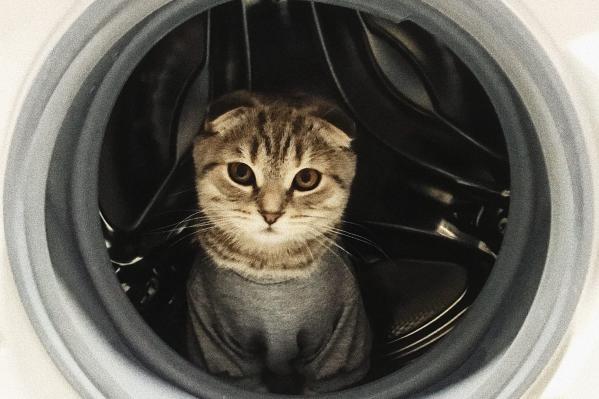 Любопытная кошка забралась в стиральную машинку, где было грязное белье