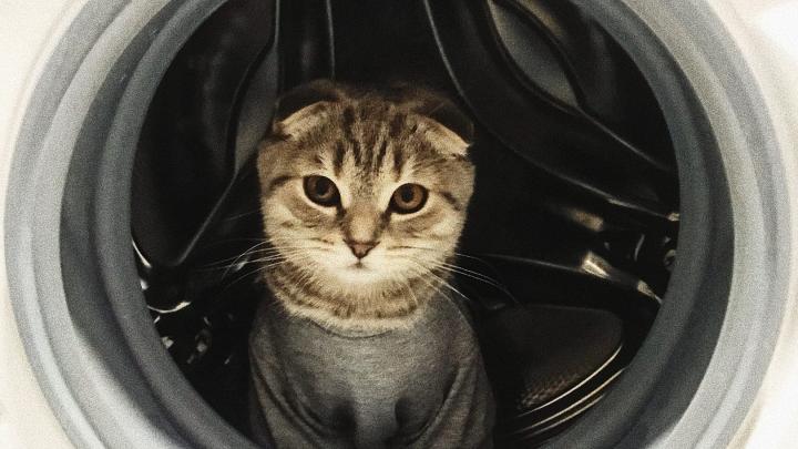 Тюменцы случайно постирали свою кошку в машинке