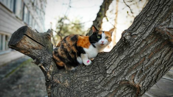 «Где можно спрятаться от людей?»: 27 котов, которые устали от хозяев в самоизоляции