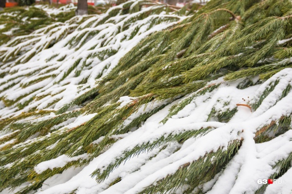 Лесных красавиц будут продавать сразу на нескольких официальных городских площадках