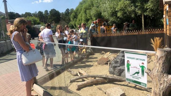 «Народ идёт и идёт»: челябинцы в жару столпились в зоопарке из-за приглашений от депутата