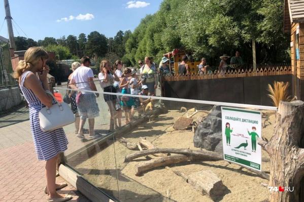 Сотрудники зоопарка просят посетителей соблюдать дистанцию, но к ним прислушиваются далеко не все
