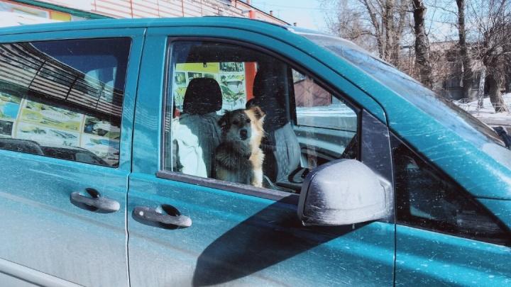 Нужна ли водителю машины справка для поездок по городу? Разбираемся в проблеме