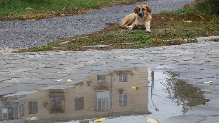 Похолодание, дожди и сильные порывы ветра: какая погода ждет Волгоград в ближайшие дни