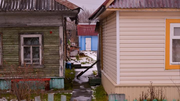 В Архангельске два волка утащили в лес собаку, которая сидела возле дома на цепи