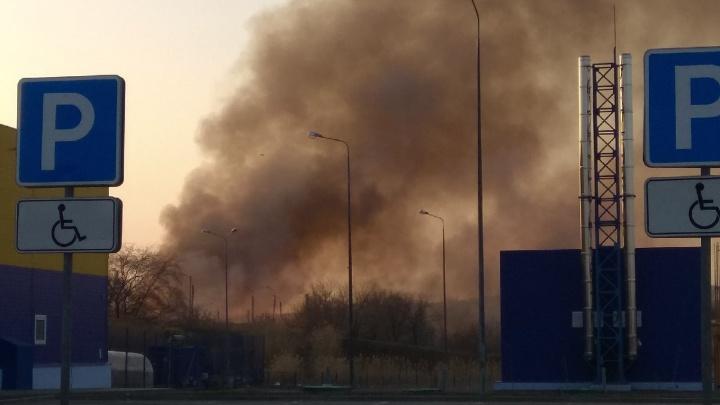 В Волгограде за «Лентой» загорелся камыш