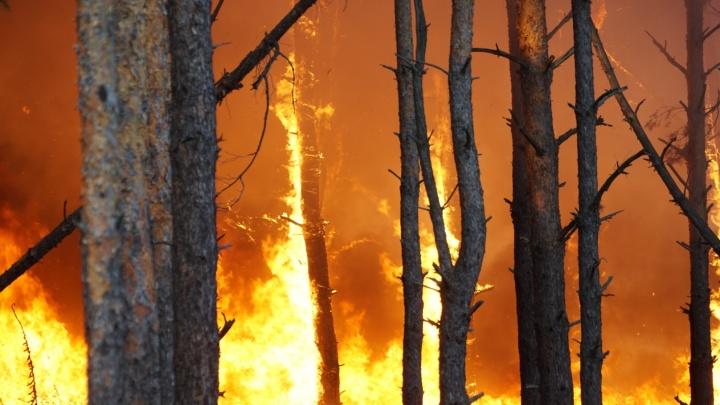 Как горела Ростовская область: хронология сентябрьских пожаров