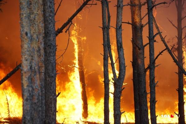 Полыхает лес в Тарасовском районе