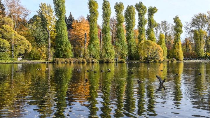 До выходных в Екатеринбурге будет облачно и без дождей