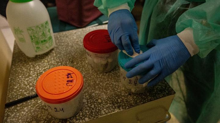 В Новосибирске начали тестировать на антитела к коронавирусу