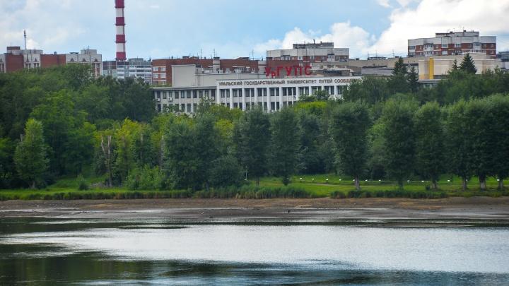 «Дикий лес не красит город»: Высокинский поддержал вырубку деревьев ради бассейна УрГУПС