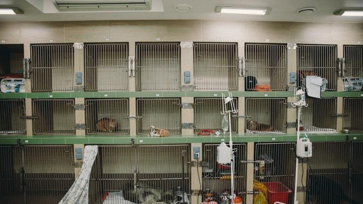 Анестезия для голубя, плановый осмотр свиньи и интимная проблема хомяка: как в Тюмени лечат животных