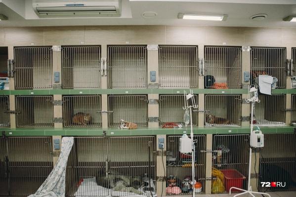 Как и человеческим докторам, ветеринарам Тюмени приходится сталкиваться со странными пациентами