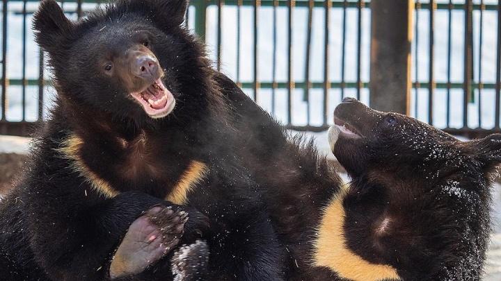 В «Роевом ручье» опубликовали милые фото животных, которые ушли в спячку